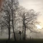 Fünfseenland - Bäume in Nebelschwaden gehüllt