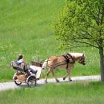 Ferienfahrerzeit im Fünfseenland. Da ist mir eine Kutsche vor mir lieber, die wissen nämlich wenigstens, wann sie andere vorbeilassen müssen …